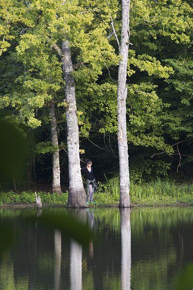 Un étang en forêt, La Celle-sur-Nièvre, Nièvre, France