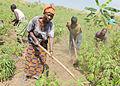 Une famille congolaise cultivant les champs dans les environs de Kalemie (15363000350).jpg