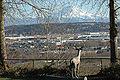 Valley floor view Auburn, Washington.jpg