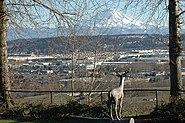 Valley floor view Auburn, Washington