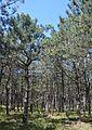 Velyka Oleksandrivka Nedohirskiy Forest 16 (YDS 0923).jpg