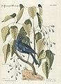 Verzameling van uitlandsche en zeldzaame vogelen (Tab. LXXX) (7894240416).jpg