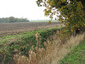 View across a ditch - geograph.org.uk - 1576992.jpg