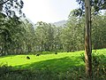 Views around Munnar, Kerala (78).jpg