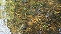 Vilalba rio Madalena 10.jpg