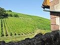 Vineyards near Riquewihr.jpg