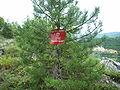 Visegrad mine warning sign.JPG