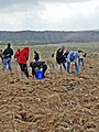 Volunteers plant American elms at the Flight 93 National Memorial in Shanksville, PA on Apr. 20, 2013.jpg
