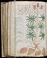 Voynich Manuscript (168).jpg