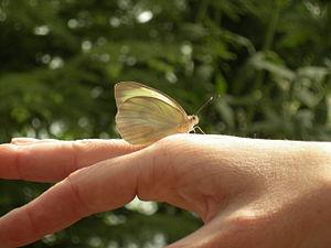 Butterflies & Blooms exhibit, Woodland Park Zo...