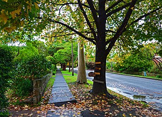 Lindfield, New South Wales - Waimea Road