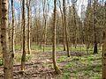 Wald bei Lauterstein - panoramio.jpg