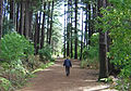 Walking in Newlands Forest.jpg