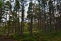 Walking trail, Inari, Finland (23) (36545340961).jpg