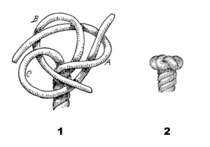 Wall and crown knot - Wall knot