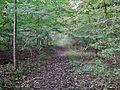 Wanderweg - panoramio (89).jpg