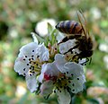 Wasp (2538517709).jpg