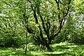 Wellington, on Quarts Moor - geograph.org.uk - 174816.jpg