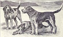 Welsh Hound from 1915.JPG