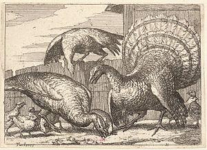 Wenceslas Hollar - Turkeys