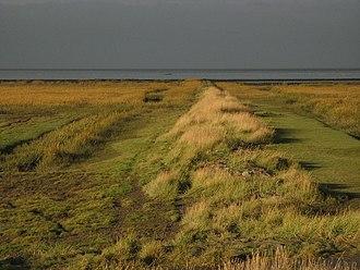 Schleswig-Holstein Wadden Sea National Park - Salt marshes make up the biggest part of the National Park's vegetation