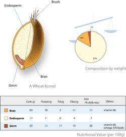 Diagram showing how much of a kernel is made up of endosperm (83%) and where it is (in the centre)