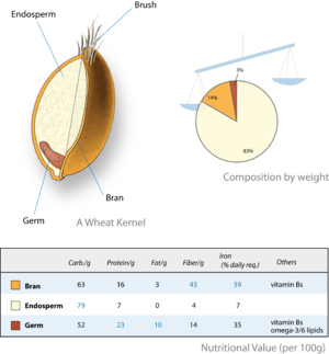 English: A wheat kernel and its nutritional va...