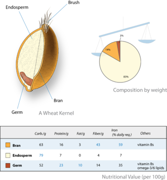 Bran - Wheat kernel compartments and macronutrients