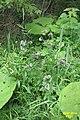 Wild herbs (Kohlberg) (15675669886).jpg