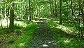 Wildcat Ridge trail, rail trail section - panoramio.jpg