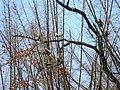 Wildlife's @ Wayanad wildlife Sanctuary - panoramio (3).jpg