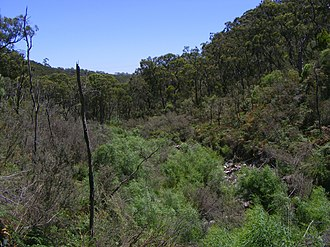 Cleland, South Australia - Wilson's bog