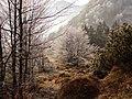 Winter magic at Campogrosso - Piccole Dolomiti.jpg