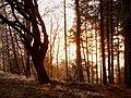 Winter sunset - geograph.org.uk - 1065353.jpg