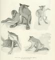 Wolfscratching.png