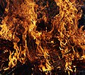 Wraxall 2013 MMB 76 Bonfire.jpg
