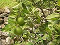 Yiling-District-Grapefruits-4880.jpg