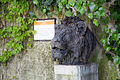 ZSL London - Lion's head sculpture (02).jpg