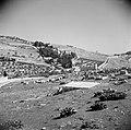 Zicht op Mount Scopus. Schapen op een begraafplaats, Bestanddeelnr 255-5148.jpg