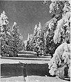Zima na Veliki planini 1931.jpg