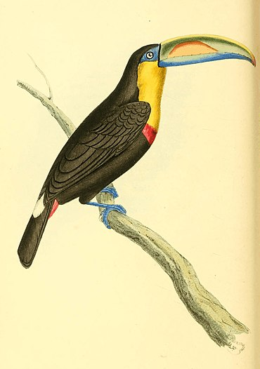Zoological Illustrations Volume I Plate 45.jpg