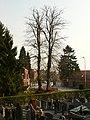 Zottegem Leeuwergem Gentse Steenweg Dorpslinde (3) - 191069 - onroerenderfgoed.jpg