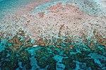 """""""Finger reefs"""" off Key West (8472697529).jpg"""