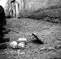 """""""Progla"""" - past za ptiče lovit, Goč 1958.jpg"""