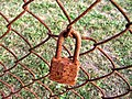 (2005) Rusty Padlock & Fence.jpg