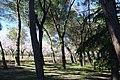 ®s K3 SD ┼ MADRID KATRESYA PQUE. QUINTA de los MOLINOS - panoramio (16).jpg