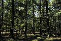 Δάσος.jpg