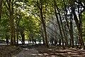 Буковый лес. Озеро Рица. Абхазия.JPG