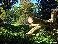 В парке - panoramio (23).jpg