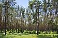 Гетьманський національний природний парк 04 by Oleg Belous.jpg